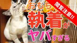 【ちょいグロ】子猫のおもちゃへの執着がヤバ過ぎる!