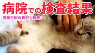病院で子猫の血液検査 結果報告【去勢手術の費用も】