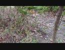 第92位:癒し・・秋の公園にて thumbnail