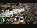 【ベランダビオトープ#3】12月 - 冬の訪れ