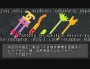 第13位:【ゆっくり解説】自然免疫系のレセプター thumbnail