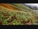 第28位:Ambient Music No.4 thumbnail