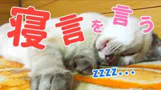 スピースピー寝言を言う子猫がかわいすぎる