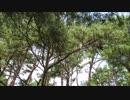 【乃万視点】ホモと見るノリカス一家 本栖湖キャンプ場 フルver