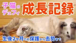 生後2ヶ月の子猫デュフィを保護した日からの成長記録【予告編】