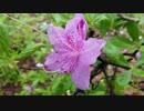Close-Up Video of Wet Flower 竹崎伸一郎