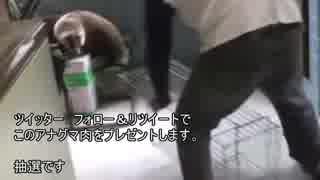 アナグマ肉配布キャンペーンのお知らせ
