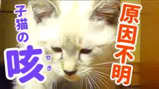 子猫、原因不明の咳が毎晩続く【考えられる原因とその後について】