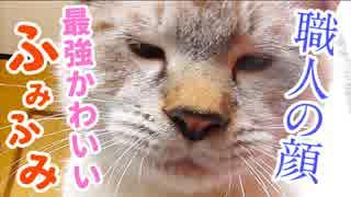 究極の職人芸にメロメロ…子猫がパン生地をこねる
