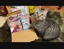 【2019】シャロに福袋買ってみた【あけおめ!】