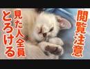 人を癒やすために生まれてきたとしか思えない猫の赤ちゃんがかわいすぎた