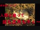 野良猫シリーズ 人間と違って盆も正月もネェ~