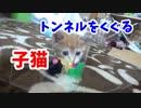 透明トンネルをくぐる子猫がかわいい( *´艸`)