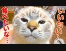 【かわいすぎ】我慢できない子猫のクンクン顔がかわいすぎて困っています