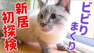 子猫念願の引越しで喜ぶかと思いきやビビりすぎて異常事態が発生…!