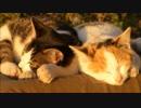 野良子猫が夕日の中でくつろぐとかなり癒しの効果があることが判明
