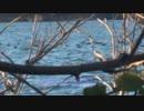 スリングライフル狩猟記#8
