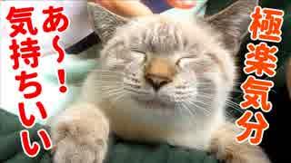 布団で一緒に寝てくれる子猫にとろけるほどナデナデしたらかわいすぎた
