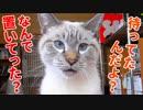 外泊して帰ってきた飼い主に再会後すぐ説教し始める猫が甘えん坊すぎた