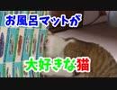 お風呂マットを噛みたい猫。新品を要求してきたw