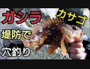 #4 【海釣り】防波堤の隙間でガシラ(カサゴ)釣り【穴釣り】
