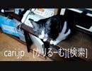 2019年1月9日猫スズ(すず)の動画。1901091923KVID0318logo