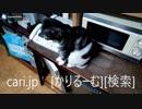 2019年1月9日猫スズ(すず)の動画。 1901091924KVID0319logo