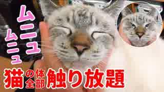 顔をグニャグニャに揉んでも飼い主の膝から降りようとしない猫がかわいすぎた