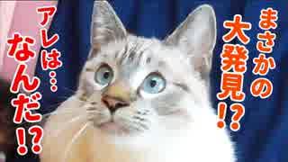 猫の視線の先にまさかの大発見で飼い主もビビリまくる!的なサムネイルになってしまいましたが、猫がジャンプしまくるかわいい映像です
