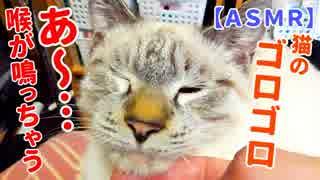 【ASMR】膝の上でくつろぐ猫が喉をゴロゴロ鳴らす耳福のおすそ分け動画