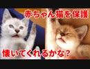 第19位:生後2ヶ月で保護した子猫がお腹を見せて懐いてくれる4週間の成長記録