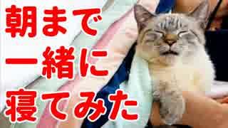 【かわいすぎ注意】猫のデュフィと朝まで一緒に寝てみたら…<第2弾>