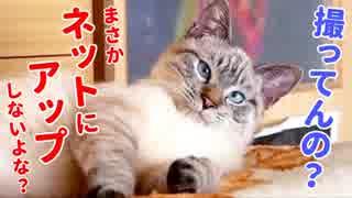 恥ずかしすぎる寝相を全世界に公開されたかわいすぎる猫がこちらです