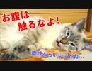 第89位:眠る猫のフワフワな毛がかわいすぎて、つい撫でてしまったら大変なことになりました… thumbnail