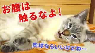 眠る猫のフワフワな毛がかわいすぎて、つい撫でてしまったら大変なことになりました…