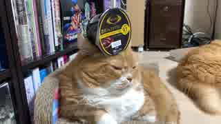 【マンチカンズ】のせ猫ティオ