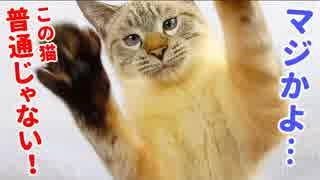 獲物を狙って垂直跳び&猛ダッシュが止まらない猫に意外な展開が…