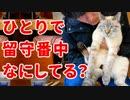 第1位:留守番中の猫の様子を撮影してみたら、意外な行動がかわいすぎた! thumbnail