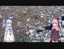 琴葉姉妹と何して遊ぼう 第6話 管釣りその2 小柿渓谷放流釣り場