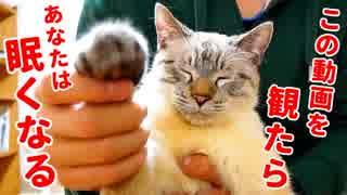 【寝落ち注意】この猫の催眠術にかかって眠らなかった人間はいません