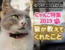 第20位:旦那を尻に敷くメス猫「サイコパス」や美食家「デュマン」イスタンブールの個性的な猫たちのドキュメンタリー『猫が教えてくれたこと』 thumbnail