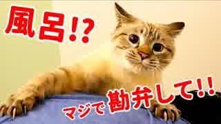 【悲劇】風呂嫌いな猫を洗おうとしたら大変な事になりました…