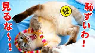 """【R指定】興奮のあまり大開脚してしまった猫の""""マル秘""""映像を公開しちゃいます"""