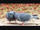 ある日の桜島(その125)<桜島と,とりさん改めアオサギさんとイチャラブ鳩カップルと若いネコと>