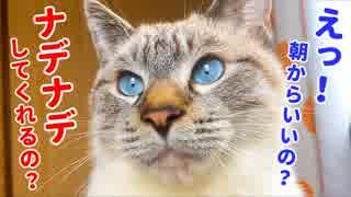 まだ寝てたい飼い主のマッサージ攻撃に懐柔されちゃう猫がかわいすぎた