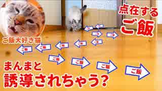 1粒ずつジグザグに置かれたご飯に猫は釣られる説 を検証します