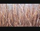 石川諒「枯れた草」