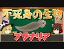 【へんないきもの】不死身の生物プラナリア【ゆっくり解説#2】