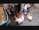 おじじのテキトーな犬の散髪