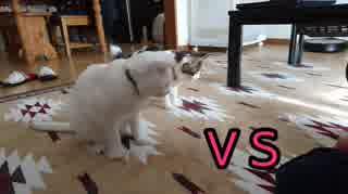 猫 VS 俺